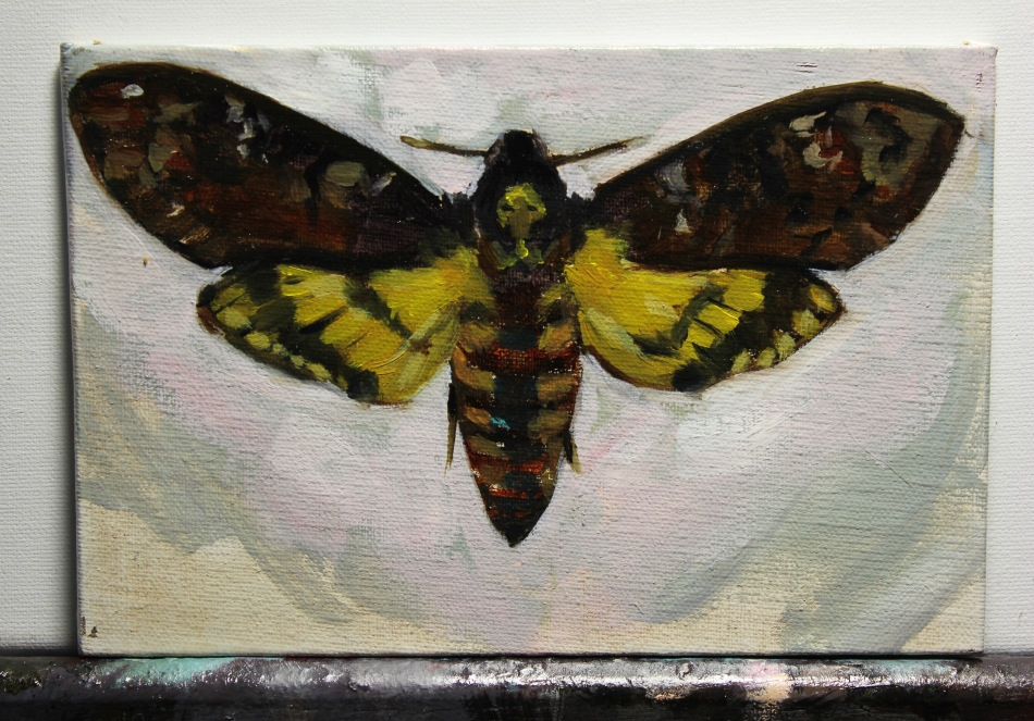 Death's Head Moth - Anthony Cramer, 2015